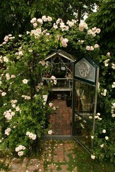 an arbor of climbing roses to door entrance