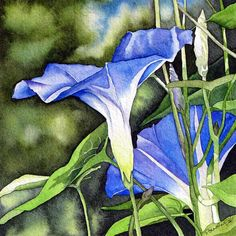 Morning Glory Painting by Brenda Jiral - Morning Glory Fine Art Prints and Posters for Sale