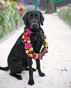 Wedding Dog Wreath |