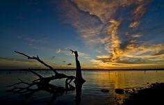 Sunrise tree by Wilkinswerks  on 500px