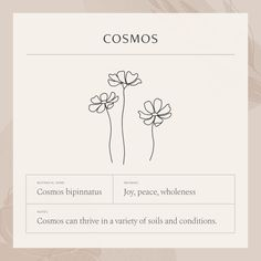 Mini Tattoos, Flower Tattoos, Small Tattoos, Create My Tattoo, Cosmos Tattoo, Cosmos Flowers, Flower Meanings, Viking Symbols, Language Of Flowers