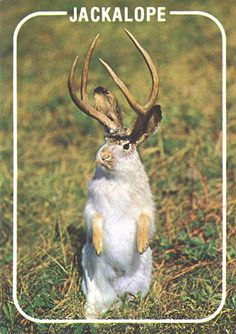 The Jackalope. Reminds me of home. My roots, living in Wyoming.