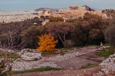 The winter in Athens is like that... An extended autumn!