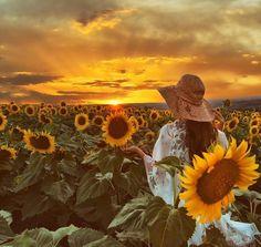 Sunflower field in Tekirdag-Turkey // Photography by Serkan DEMİRCİ (@sserkan34) • Instagram photo