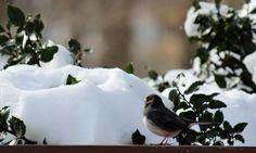 """#WinterinCT"" "" #CenterofCT"".... Winter in Ct photo Contest.                   Bird warming to the sun"