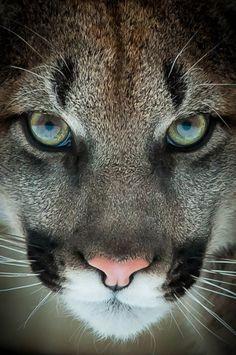 Mirada de felino - Wowwwwww