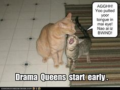 Drama Queen Kitteh..reminds me of the both of us, lol