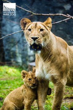 Like mother like cub! #namethecubs