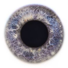 Image result for iris textures add to folder