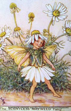 Cicely Mary Barker - The Scentless Mayweed Fairy
