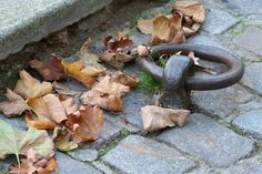 Anneau en automne. canal st martin paris © Caroline DUEZ