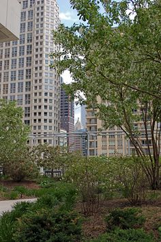 Chicago Healthcare Garden Design Training. Nature+City+Growth