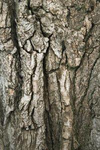 How to Paint Faux Tree Bark thumbnail