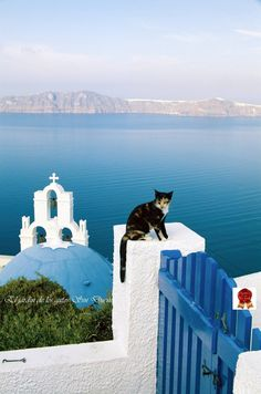 The gate keeper/Santorini Island, Greece I Love Cats, Crazy Cats, Cute Cats, Santorini Greece, Santorini Island, Mykonos, Kittens Cutest, Cats And Kittens, Greece Travel