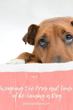 Before you decide on putting up your dog for adoption by another family, there are a number of things that you need to think about first. Pet Dogs, Pets, Loyal Friends, Dogs For Sale, Dog Pin, Adopting A Child, Your Pet, Labrador Retriever, Adoption