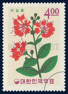 Postage Stamp Of Plant, a crape-myrtle, a garden zinnia, flower, red, green, purple, 1965 09 15, 식물시리즈, 1965년 09월 15일, 471, 백일홍, postage 우표