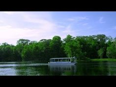 Wild about Wakulla Springs