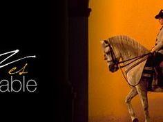 Jerez de la Frontera - Cádiz - Spain. Bookinginspain.com  do you like shrry or horses ?
