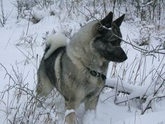 Alicia's Uncle Justin's dog Heldig hunting