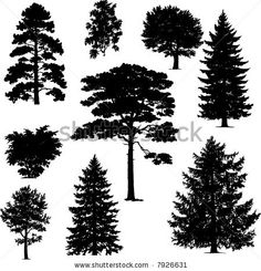 collection of pine trees