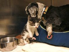 Une chienne découvre un chaton abandonné, et risque sa vie pour le sauver - épanews