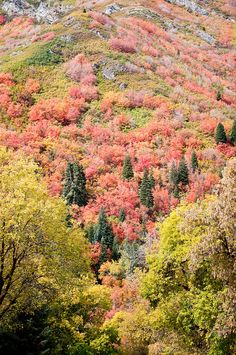 Autumn in Utah-one of the 10,000,000 reasons I love home.