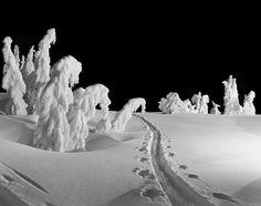 Ski tracks at night near Timberline Lodge on Mt. Hood, Oregon. Photograph by Ray Atkeson, early 1940s.
