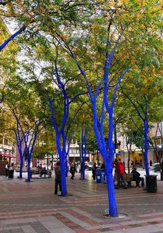 The Blue Trees, Westlake Mall West Seattle, Downtown Seattle, Seattle Washington, Washington State, Great Places, Places To See, Places Around The World, Around The Worlds, Virgin America