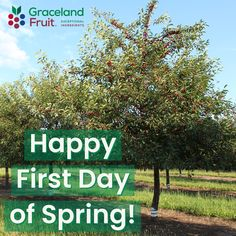First Day Of Spring, Dried Cherries, Closer, Harvest, Cherry, Trees, Magic, Shit Happens, Pop