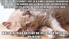Sad Cat Diary - Imgur