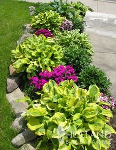 Abiqua Moonbeam Hosta - Large green leaves with chartreuse margins. Great for shady borders as well as container plants. More sun tolerant than many other Hosta varieties. Outdoor Landscaping, Outdoor Gardens, Inexpensive Landscaping, Front Yard Gardens, Landscaping Plants, Florida Landscaping, Farmhouse Landscaping, Landscaping Front Of House, Small Gardens