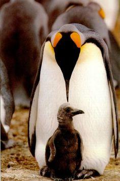 penguin unit studies