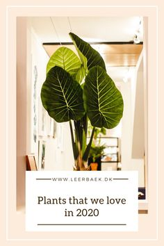 Our top 5 of popular plants 2020 Plant Leaves, Planters, Popular, Top, Popular Pins, Plant, Window Boxes, Crop Shirt, Shirts