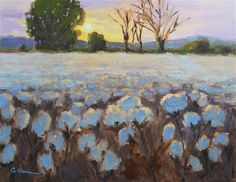 """Daily Paintworks - """"Days End on Cotton"""" - Original Fine Art for Sale - © Colleen Parker"""