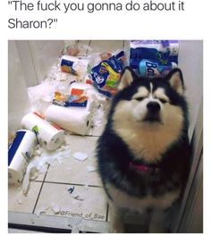 """the fuck you gonna do about it Sharon?"" / living with dogs"