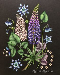 Lupine, Lilac & Aquilegia vulgaris from my lovely Tavelbok. Used Prisma…