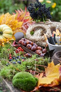 decorate with bounty from the yard, (chestnuts, leaves, pine cones, walnuts, hickory nuts, dried hydrangea, pumkins).