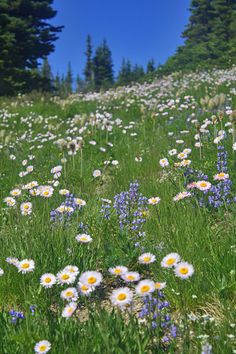 Wildflower meadows at Sunrise are breathtaking and rival the meadows of neighboring Paradise. Flower Feild, Landscape Photography, Nature Photography, Pretty Landscapes, Images Esthétiques, Felder, Nature Aesthetic, Beautiful Places To Visit, Ciel