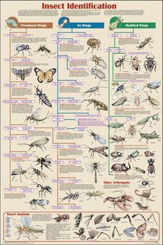 Insect Identification Educational Science Chart Poster Education Poster - 61 x 91 cm Garden Bugs, Garden Insects, Bugs And Insects, Garden Pests, House Insects, Plant Pests, Poster Art, Poster Prints, Art Prints