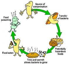 Food-Borne Illness and Food Poisoning – Which Foods are the Worst?