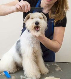 How to Become a Dog Groomer | Top Dog Tips