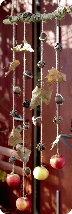 Natural windcatchers/mobiles - nuts, apples & leaves tied onto a branch. Hang outside for the squirrel & birds to eat.