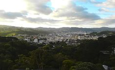 view from Melrose, Wellington, New Zealand
