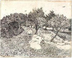 Olive Trees, Montmajour by Vincent van Gogh Drawing, Pencil, reed pen, brown and black ink on Whatman paper  Arles: July, 1888 http://www.vangoghgallery.com/catalog/Drawing/1205/Olive-Trees,-Montmajour.html