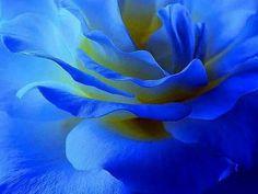 It's Blue...