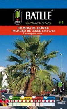 Semillas de palmeras ornamentales