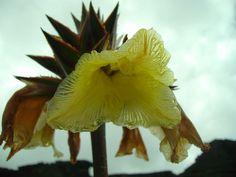Flores y Plantas Carnivoras (2)