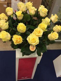 Rose Savita (Arend Roses)