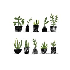 All lined up for their close up 🌿 Our plant collection has been growing and it's making me want to put up a shelf in our dining room for all of them!