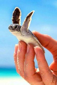 Baby sea turtle #beach #vacation